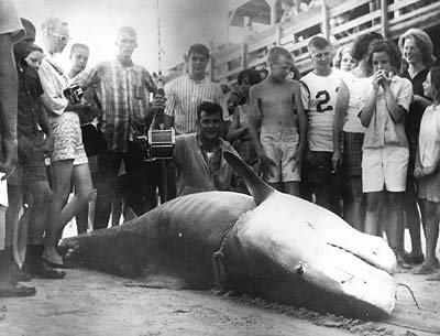 A look back at the world record tiger shark part ii the for Cherry grove pier fishing report