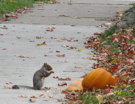 10-120-2009 fall picss 003.JPG