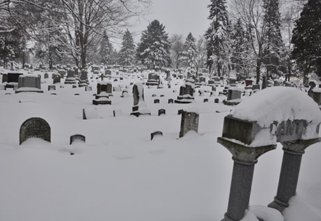 elmwood_snow02.jpg