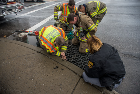 Apex police, firefighters and good Samaritans rescue ducklings from storm drain