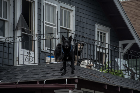 dogonroofapril302017dogs.jpg