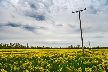 yellowflowersroute77may2019.jpg